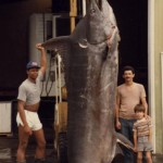 Largest-Marlin-Ever-Caught-1