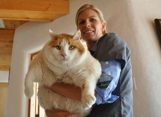 Biggest Cat In The World Guinness 2016 biggest cat in the world guinness 2012 with decorating