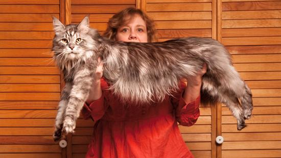 stewie longest cat 2