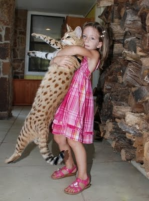 worlds tallest cat 1