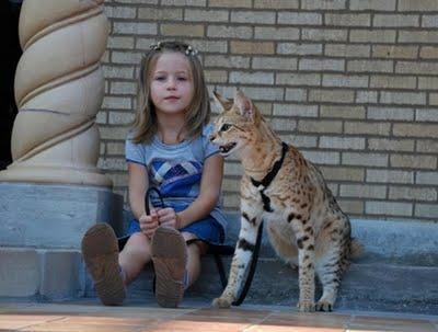 worlds tallest cat 21