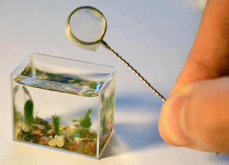 Smallest Aquarium In The World 1