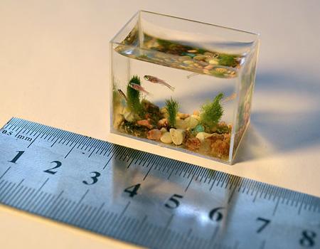 Smallest Aquarium In The World 3