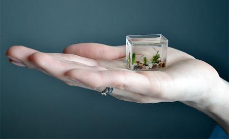 Smallest Aquarium In The World 4