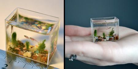 Smallest Aquarium In The World 6