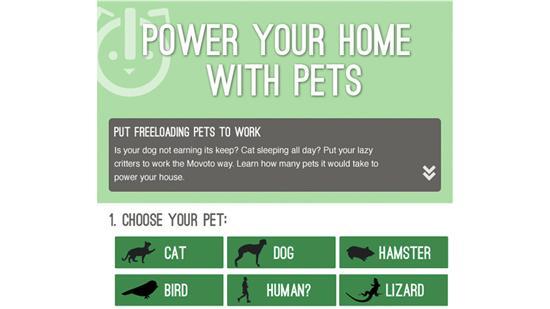 pets energy
