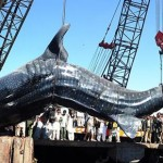 Giant-wale-shark-pakistan-1