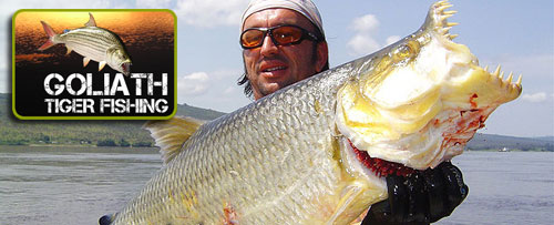 Goliath tigerfish 2