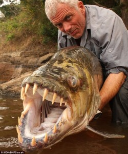 peces gigantes fish 250x300 Giant fish that eats crocodiles and humans was discovered as seen on CoolWeirdo.com