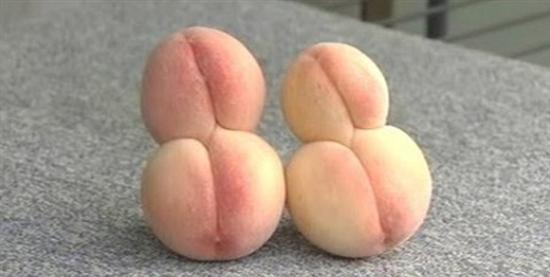 Fukushima mutant peaches