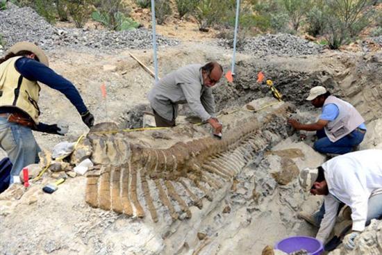 intact dinosaur tail mexico 1