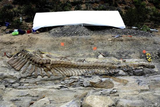 intact dinosaur tail mexico 3