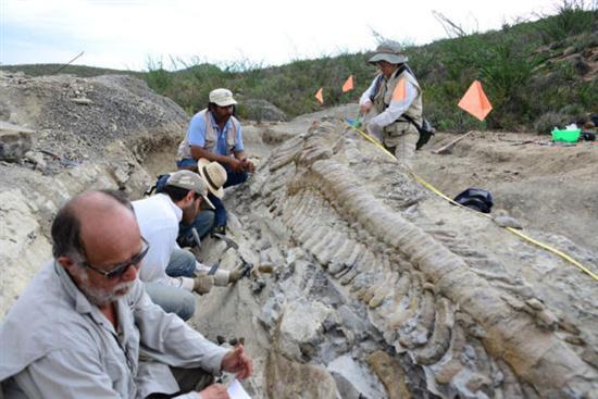 intact dinosaur tail mexico 6