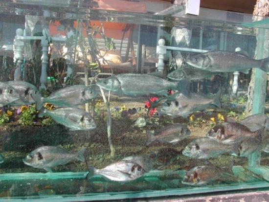 turkish aquarium fence 9