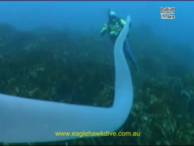 giant pyrosome 4 Rare Giant Underwater Creature: Unicorn of the Seas as seen on CoolWeirdo.com