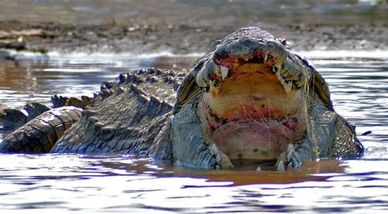 biggest croc 1