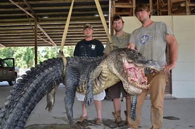 biggest gator 1