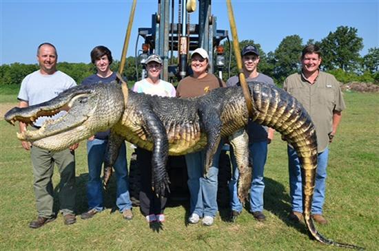 biggest gator 2
