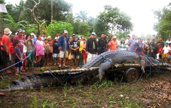 worlds biggest croc 2
