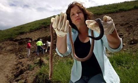 giant-gippsland-earthworm