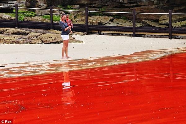 red tide beach