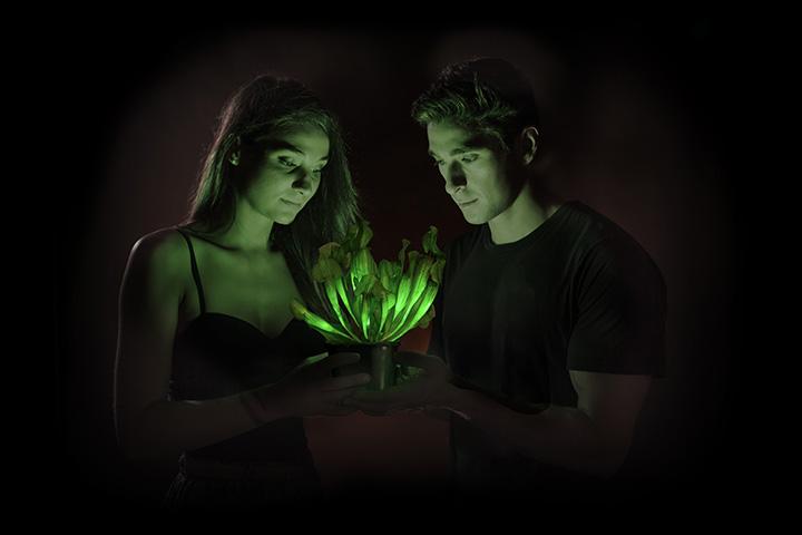 romantic dinner glow plant