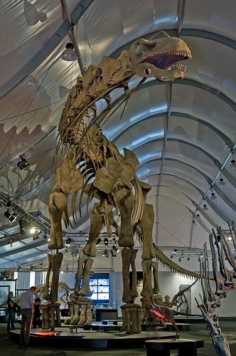 Argentinosaurus_DSC_2943