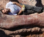biggest dinosaur 175x150