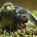 bird-mouse