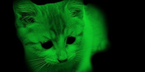 fluorescent-cat