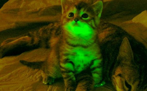 glowing-cat