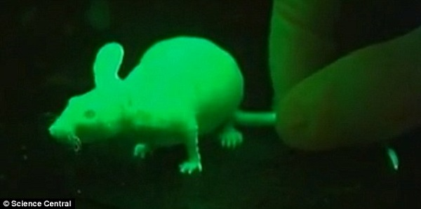 glowing mous