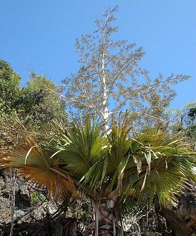madagascar slow flowering