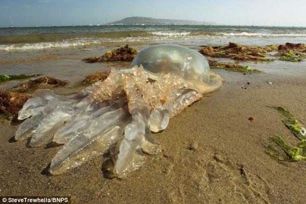 alien jellyfish