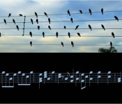 Birds On The Wire Jarbas Agnelli 175x150