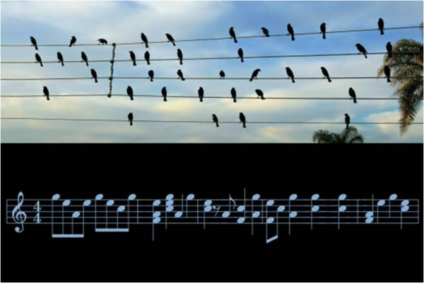 Birds On The Wire Jarbas Agnelli 600x400