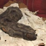 Giant-mummy-finger-Egypt1
