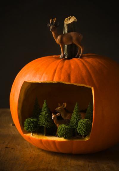 nature-pumpkin