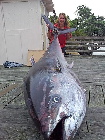biggest tuna caught fish