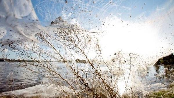 largespider webs