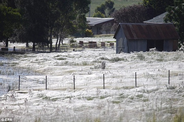 spider built webs field