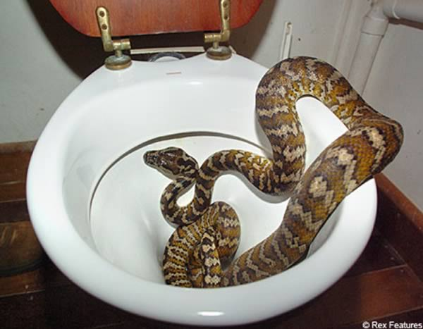 Weirdest Things Found Stuck In The Toilet Bowl