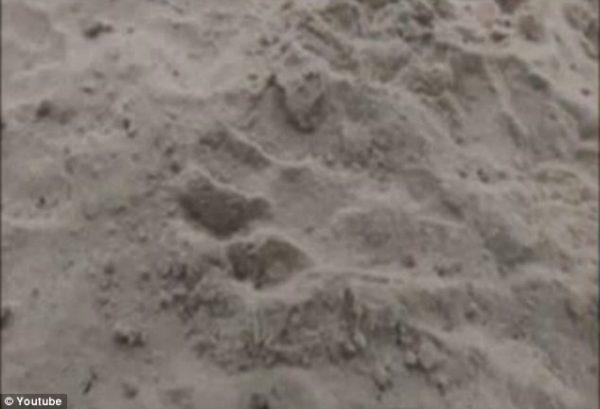 chupacabra-footprint