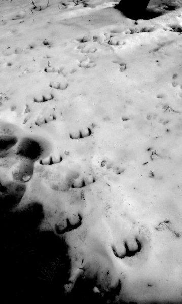 devils-footprints-strange-creature-in-snow