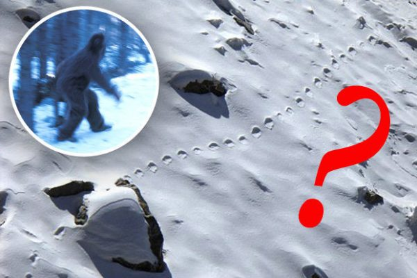 yeti footprints in snow and image 600x400