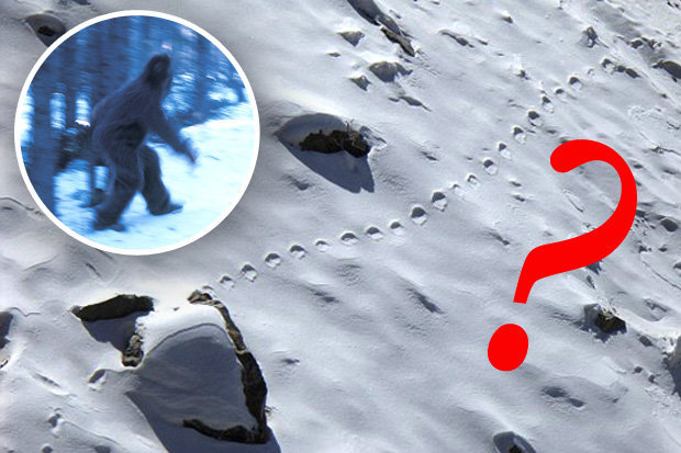 yeti footprints in snow and image