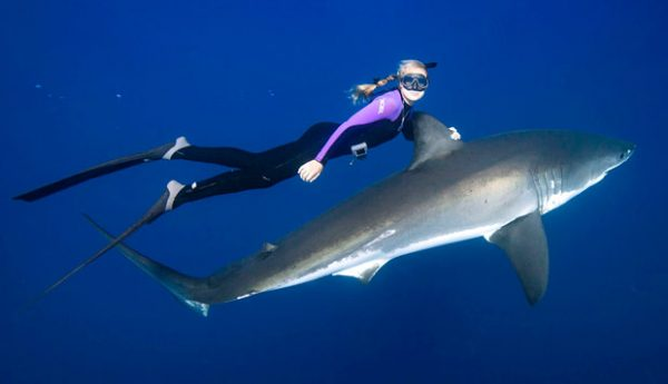 A Woman Near a Bunch of Sharks Is Spotted From a Plane people swimming with sharks around them 600x345