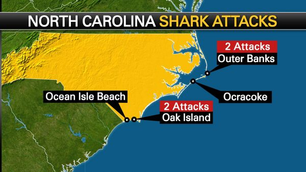 North Carolina Divers Are Targeted by Several Shark Attacks people swimming with sharks around them 2 600x338