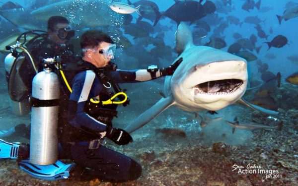 True Adventurers Can Now Spend Their Vacation Swimming with Huge Sharks people swimming with sharks around them 600x375