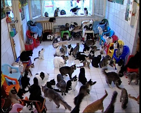hundreads of cats going crazy for food